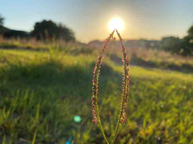 Ray of light through blades of grass